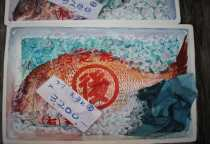 John Batty, Red Bream -Tokyo Fish Market