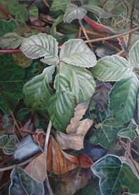 Delia Cardnell, 'Frosted Leaves'