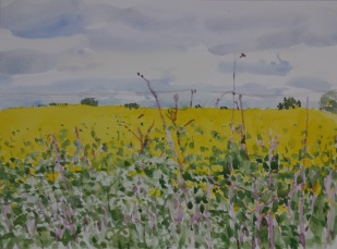 Danny Markey, Yellow fields