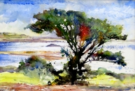 Paul Hoare, Bryher Tree, Scilly Isles