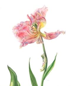 Victoria Braithwaite, 'Tulipa 'Vaya con Dios'', £3,800